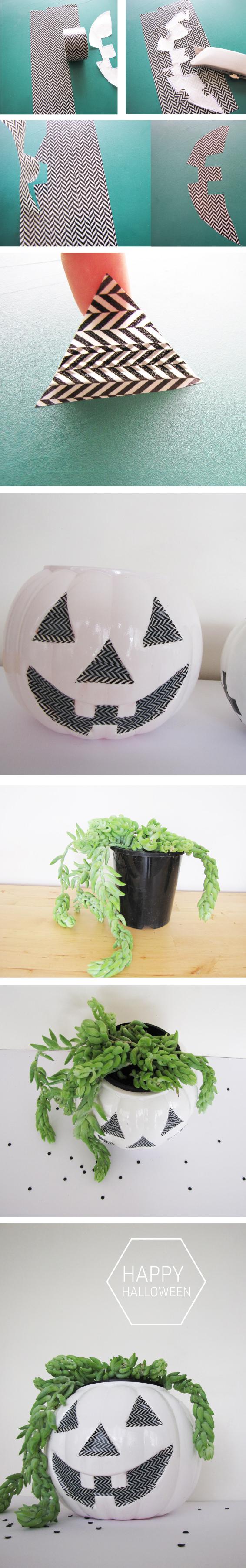 TOMFO-plant-pumpkin
