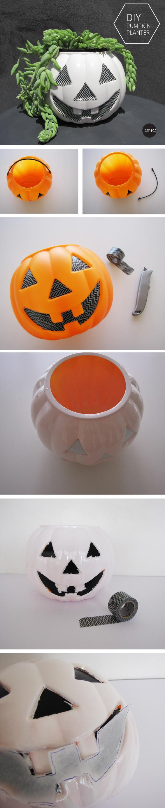 TOMFO-plant-pumpkin2
