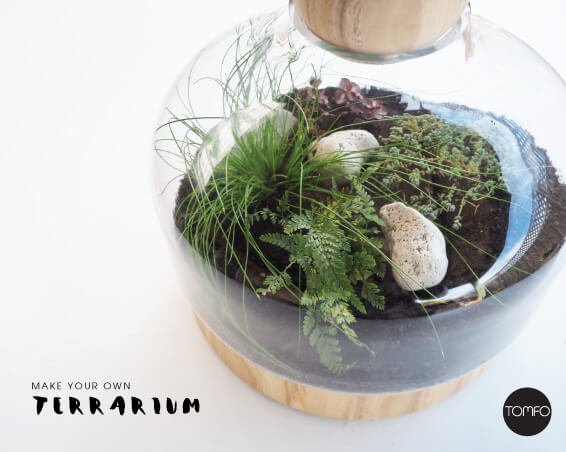 How-to-make-a-Terrarium-Tomfo-h