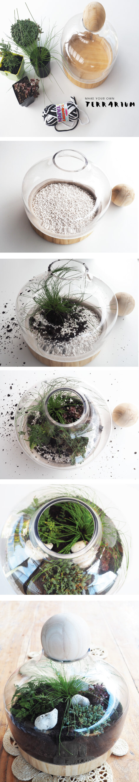 The-plants-I-used-to-make-a-Terrarium-Tomfo