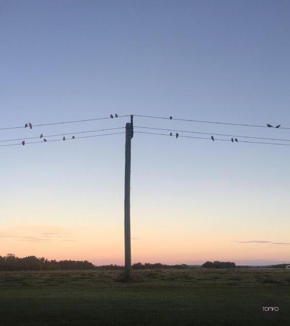TOMFO-Birds